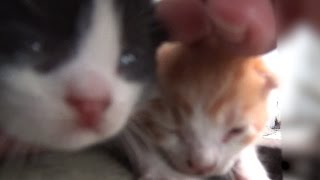 Download 落し物探しに行ったら赤ちゃん猫がいた I went to look for my lost items There was a baby cat【野良猫観察記】 Video