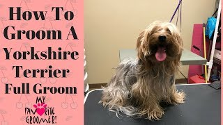 Download How to Groom a Yorkie (coconut) Video