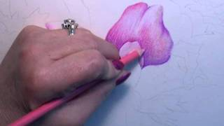 Download Colored Pencil Instruction with Paula Leopold Video