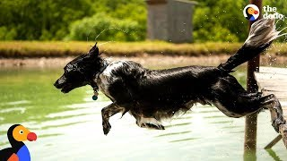 Download Dog Sprints and Jumps Into Water Every Chance He Gets | The Dodo Video