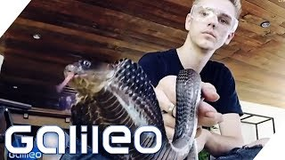 Download Der deutsche Schlangen-Teenie in Thailand | Galileo | ProSieben Video