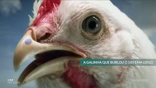 Download ″A Galinha que Burlou o Sistema″ no Cine Nacional - 29.11.19 Video