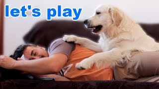 Download When you want to Relax and you have a Dog Video
