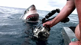 Download A Great White Explores with Her Mouth | Shark Week Video