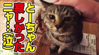 Download 毎日一緒の猫さんと3日振りに再会してみた結果… Video