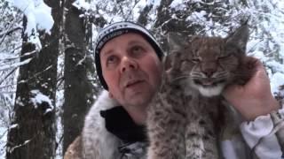 Download Lynx hunting in Kirov NEW Engl Video