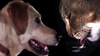 Download Cats vs Dogs in slow motion | Slo Mo #5 | Earth Unplugged Video