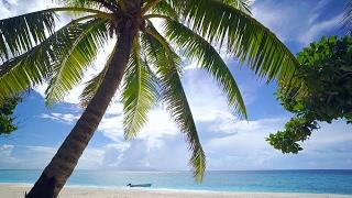 Download The Perfect 4K Beach Scene: Fiji 1 Hour Glistening Island Beach plus Nature Sounds UHD Video