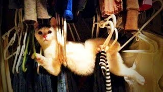 Download Cute Animals 😂😅 Crazy Pets Playing (Full) [Funny Pets] Video