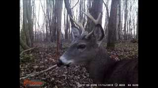 Download Best of 2014 and 2015 Trail Cam pics Video