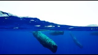 Download Amazing Sperm Whale Cam - Blue Planet II Behind The Scenes Video