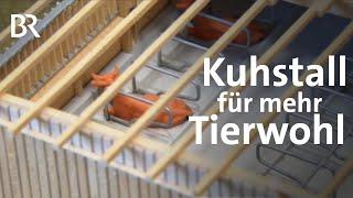 Download Für Tierwohl und Umwelt: Ein Kuhstall aus Holz | Unser Land | BR Fernsehen Video