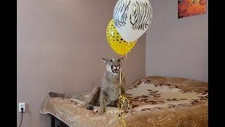 Download Сюрприз для Месси! Воздушные шарики на день рождения. Video