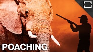 Download Why Can't We Stop Poachers? Video