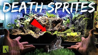 Download DEATH SPRITES: Creating a Frog Haven & Ant Hell Video