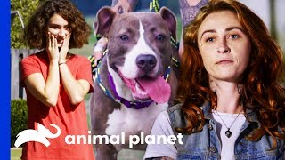 Download Will Polo Be The Perfect New Playmate For This Family? | Pit Bulls & Parolees Video