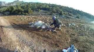 Download Ciclistas ajudam vaca quase morta a dar à luz Video