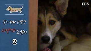 Download 세상에 나쁜 개는 없다 - 살기 위해 도망친 사냥개 호선이 #002 Video