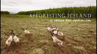 Download Afforesting Iceland - a cause for optimism Video