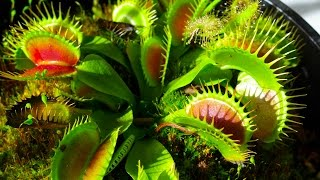 Download Carnivorous Plants Video