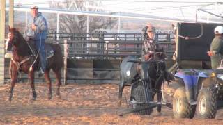 Download Speed Williams Team Roping with Son Gabe Williams Video