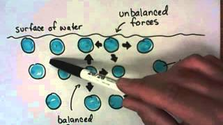 Download What causes Surface Tension? Video