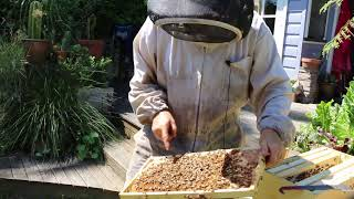 Download A day with an Australian Beekeeper Video