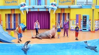 Download Clyde & Seamore's Sea Lion High Debuts at SeaWorld Orlando - Premiere Show Highlights Video