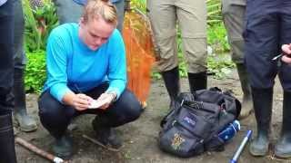 Download Biodiversity & Development in the Amazon, Peru: The School for Field Studies Video