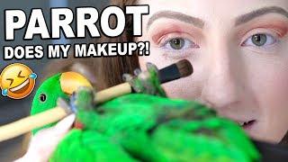 Download MY BIRD PICKS MY MAKEUP CHALLENGE!!! *disaster* Video