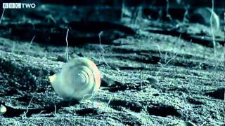 Download Small Spider Lifts Snail Shell Up Tree - Madagascar - BBC Two Video