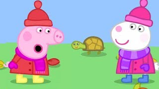 Download Season 5 - NO!!! Peppa Pig Full Episodes | Naughty Tortoise | Cartoons for Children Video