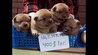 Download Собачий рынок Одесса. Разные породы собак. Продажа собак и кошек. Топ 5 собак, птичий рынок наш Video