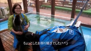 Download ドタバタフィルター掃除(伊勢シーパラダイス) Video