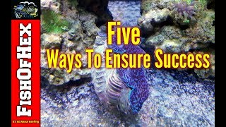 Download 5 Ways To Ensure Long-Term Success In The Saltwater Hobby Video