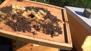 Download Beekeeping 5 rookie mistakes in this video that you can learn from Video
