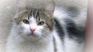 Download 嬉し泣き!2度と会えないと思っていた子猫と再会!私の声を覚えてた!兄弟猫も現れる Video