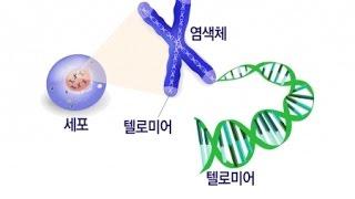 Download 늙지 않고 젊음 유지…노화의 열쇠 '텔로미어' / YTN 사이언스 Video