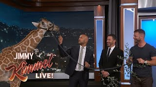 Download Adorable Baby Animals with Dave Salmoni & Keegan-Michael Key Video