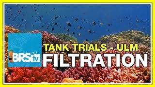 Download ULM Tank Trials Ep-4: Filtration for Ultra Low Maintenance | BRStv Video