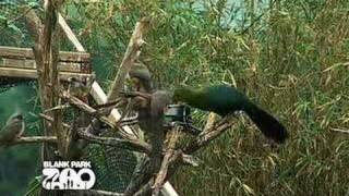 Download A Day in the Life of a Zookeeper Video