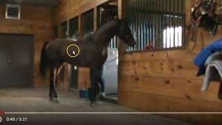 Download Should You Have Your Stallion Gelded? YES - Caged Stallion Behaviors Video