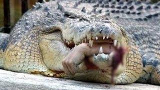 Download World's Scariest Alligators and Crocodiles Video
