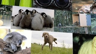 Download Top 10 Cutest Animals in Science 2014 Video