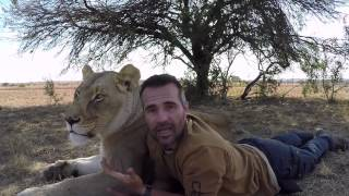 Download Lion Jealousy? Meg & Amy Moment Explained | The Lion Whisperer Video