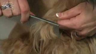 Download How to Remove Mats in Your Dog's Fur (DrsFosterSmith) Video