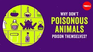 Download Why don't poisonous animals poison themselves? - Rebecca D. Tarvin Video