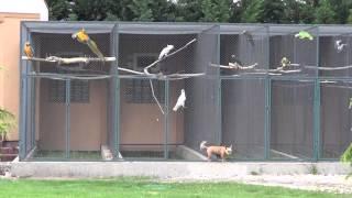Download Papagaje vo voliere, Ara, kakadu, amazoňan, žako ... Video