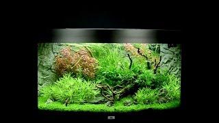 Download Juwel Aquarium Vision 180 Einrichtungsbeispiel / Tutorial Video