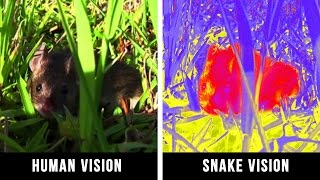 Download HOW ANIMALS SEE THE WORLD Video